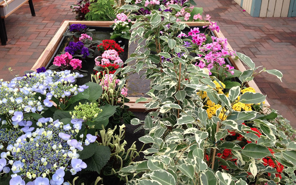 Garden Centre North Wales